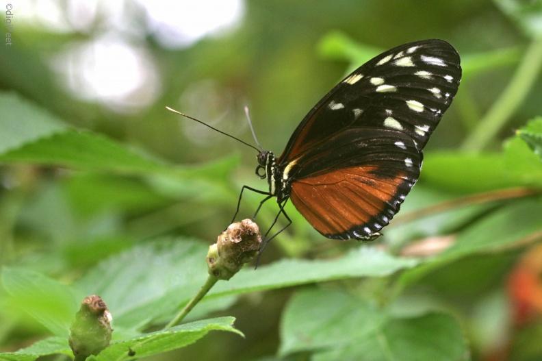 naamloos-9578-2 -- dierentuin Blijdorp